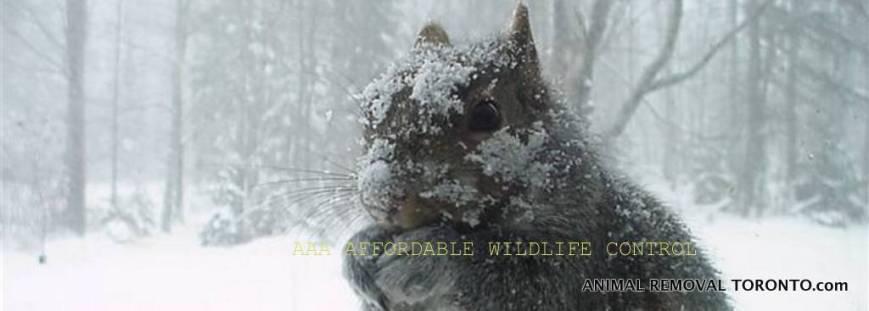 1-squirrel-removal-toronto-wildlife-control