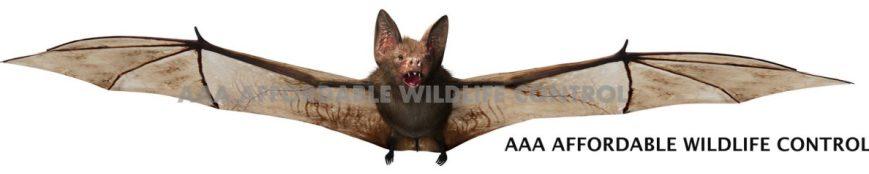cropped-1-bat-removal-wildlife-removal-toronto.jpg